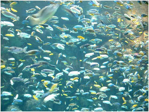 Must Know Fish Tank Basics
