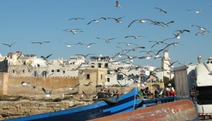 Enjoy The Best That Backpacking Has To Offer With Morocco Overland Tours