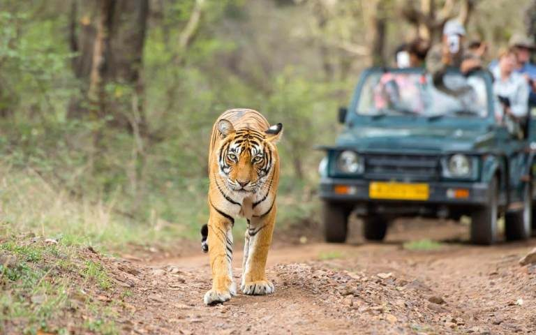 Experience Ranthambore Through Deccan Odyssey