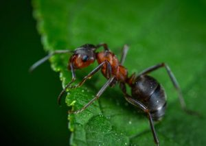Summer Bummers: How to Keep Your Home Free Of Pests